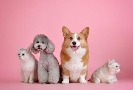 Petfluencer Haustiere